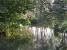 Urwald in Neikof im Juli